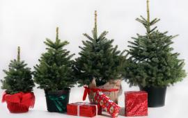 Ziemassvētku eglīte podā